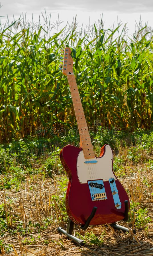 Guitar telecaster in red color against the background of a cornfield on a sunny day. Telecaster style in red metallic color stock photo