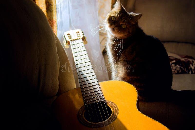 Guitare acoustique et chat regardant l'appareil-photo, à la nuance, dans la chambre, passe-temps à la maison images libres de droits