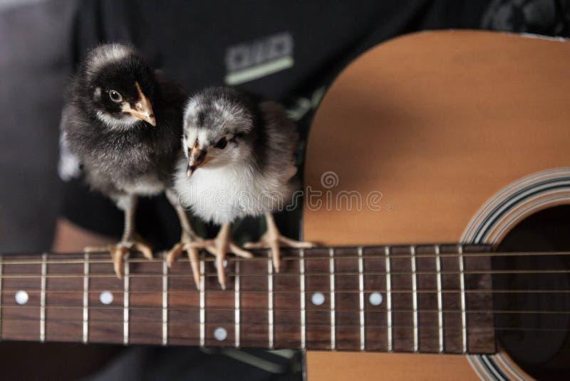 Guitarra da escavação dos pintainhos imagens de stock royalty free