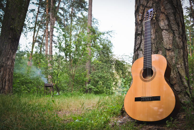 Guitarra perto de uma árvore na floresta no fundo do assado imagem de stock