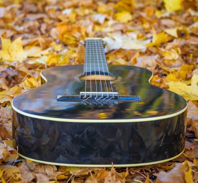 Guitarra que coloca entre as folhas fotos de stock