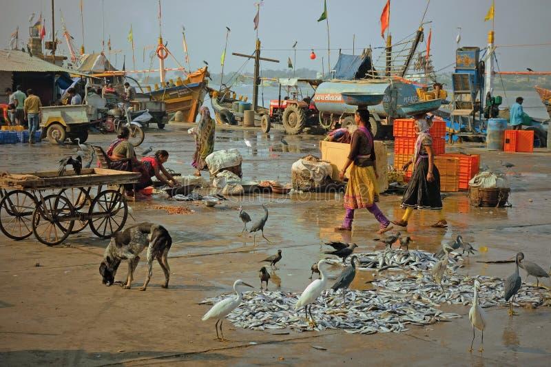 Gujuarati-Kaitätigkeit nach den Fischerbooten haben angekoppelt stockbilder