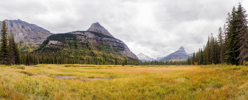 Gul äng under citadellberget - glaciärnationalpark arkivfoto