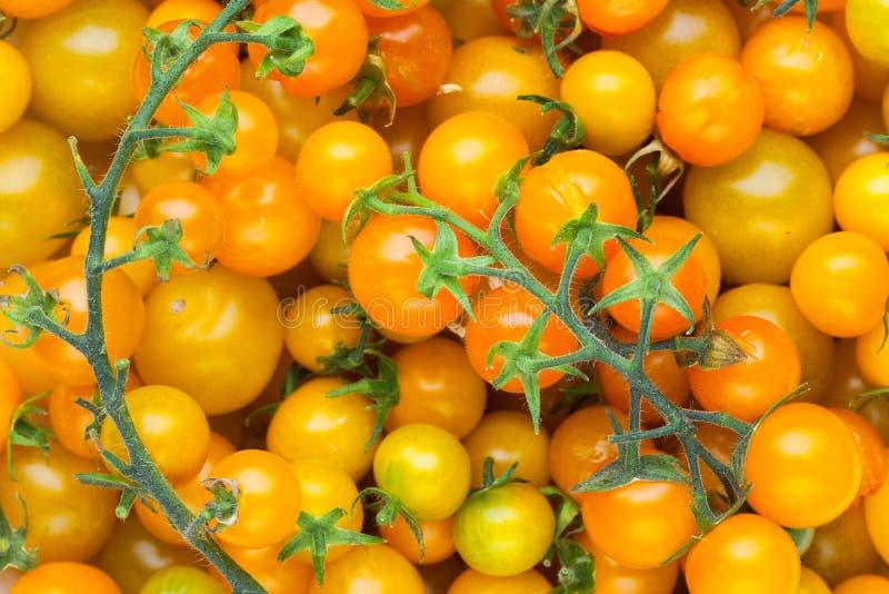 Gul bakgrund för körsbärsröd tomat royaltyfria bilder