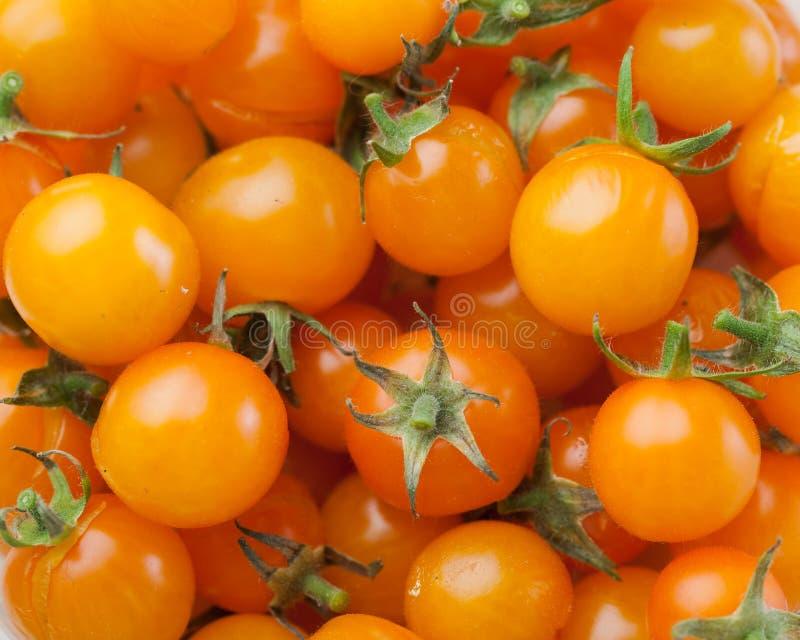 Gul bakgrund för körsbärsröd tomat arkivbild