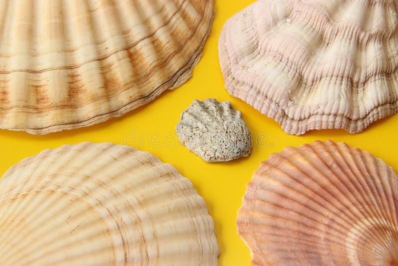 Gul bakgrund med havsskal arkivfoto