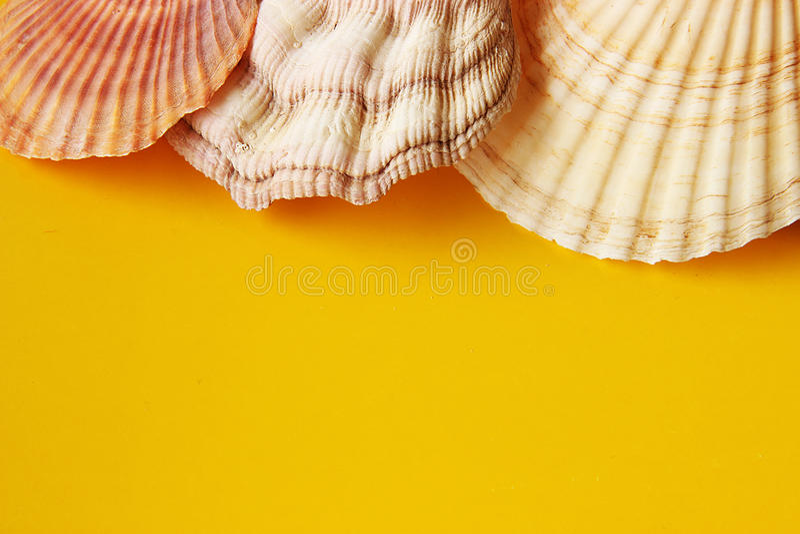 Gul bakgrund med havsskal royaltyfria foton