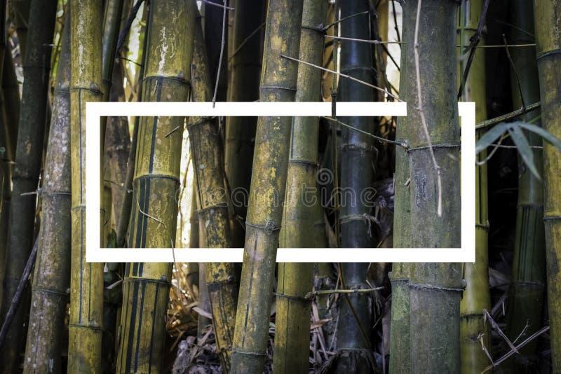 Gul bambobakgrund arkivbild