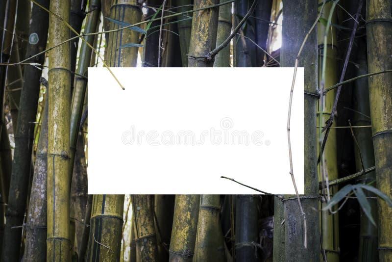 Gul bambobakgrund fotografering för bildbyråer