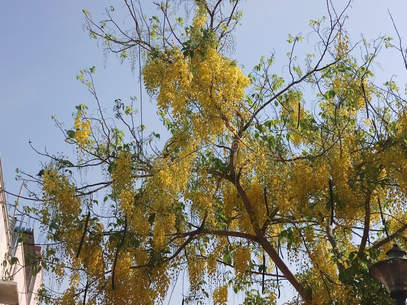 Gul blomma arkivbilder