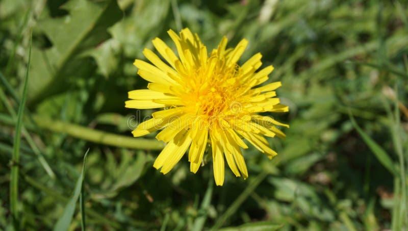 Gul blomma från det nära området arkivbild