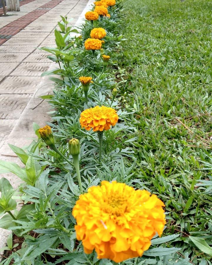 Gul blomma från en härlig stad arkivbild