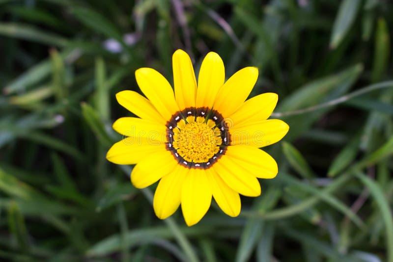 Gul blomma i en trädgård fotografering för bildbyråer
