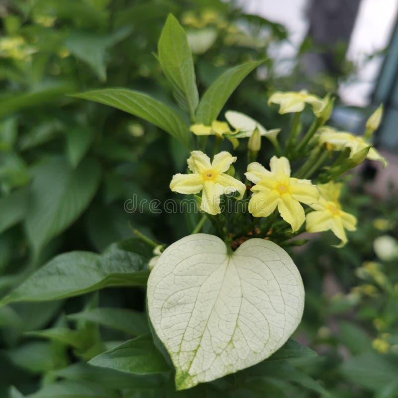 Gul blomma i tr?dg?rd arkivbilder