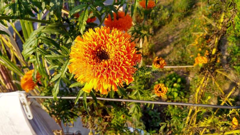 Gul blomma med ljusstyrka arkivfoto
