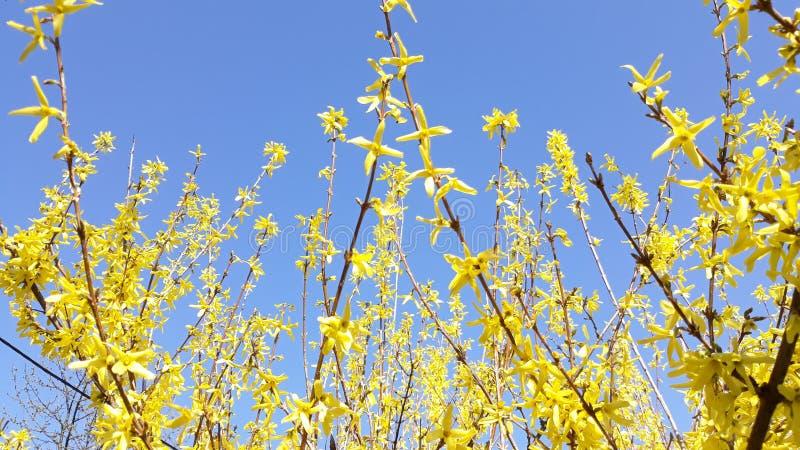 Gul blomma på blå himmel arkivfoton