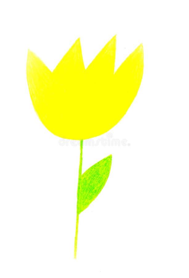 Gul blomma på en vitbakgrund arkivbilder