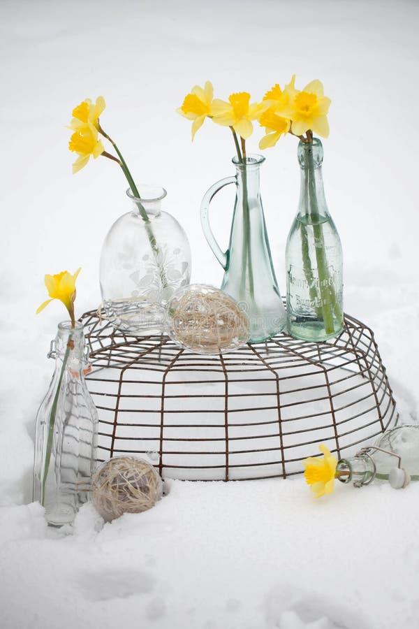 Gul blomma på snö arkivfoton