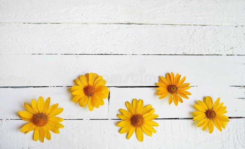 Gul blommasammansättning på den vita träbakgrunden kopiera avst?nd arkivbilder