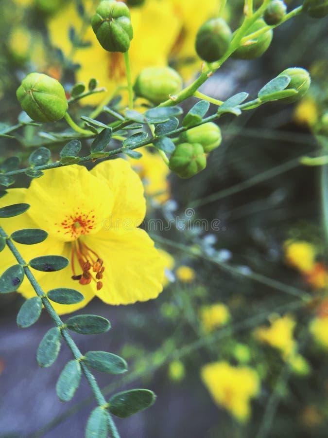 Gul blommaträdmakro fotografering för bildbyråer