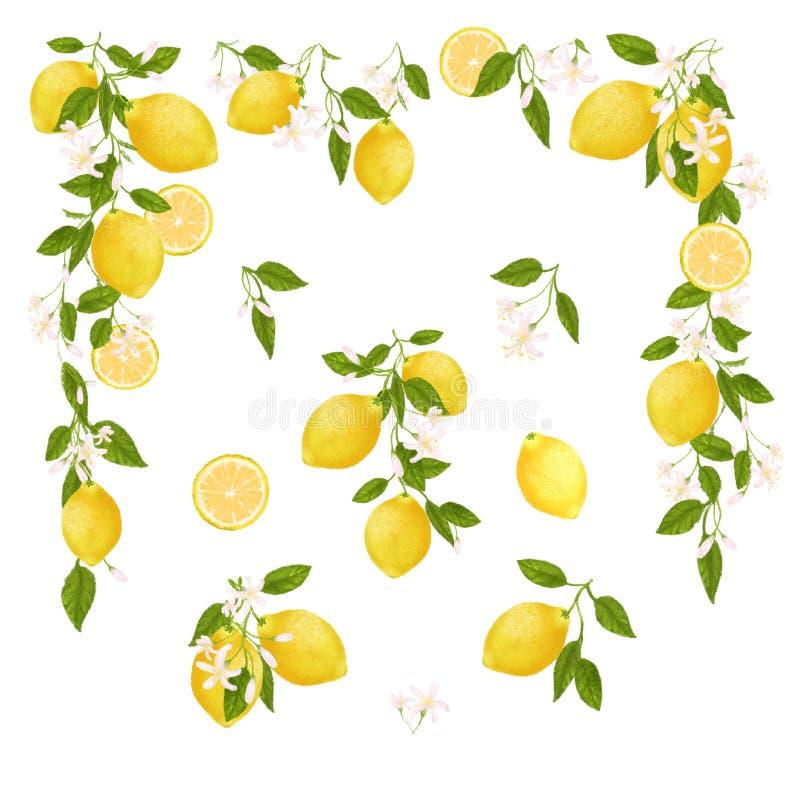 Gul citrusfrukttappningram Citronen l?mnar och blommar Tropisk illustration för gemkonst Gr?n bakgrund vektor illustrationer