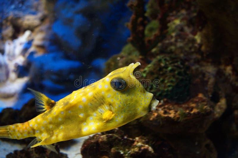 Gul fisk royaltyfri bild