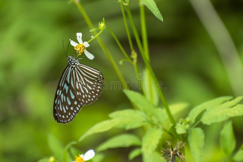 Gul fjäril på blomman med grön bakgrund arkivfoton