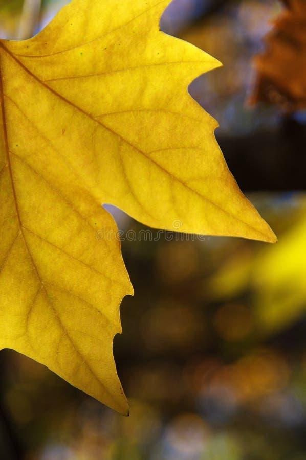 Download Gul höstleaf arkivfoto. Bild av färger, leaves, yellow - 78728200
