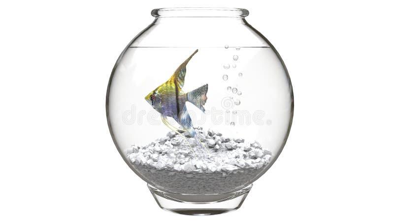 Gul havsängel i en fishbowl arkivbild