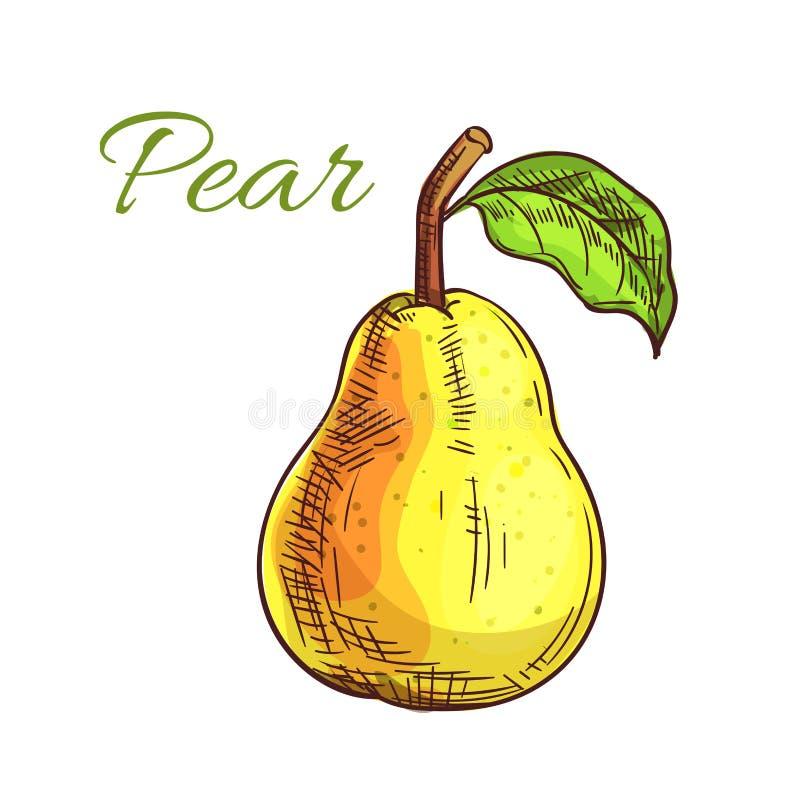 Gul isolerad päronfrukt skissar vektor illustrationer