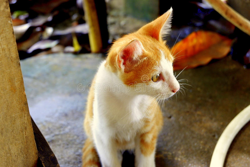 Gul kattunge arkivbild