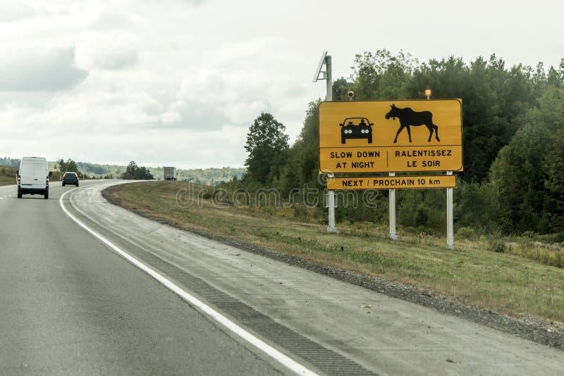 Gul korsning för älg för uppmärksamhet för varning för diamanttrafikvägmärke, postad tillsammans med väg quebec för trans. Kanada royaltyfri foto