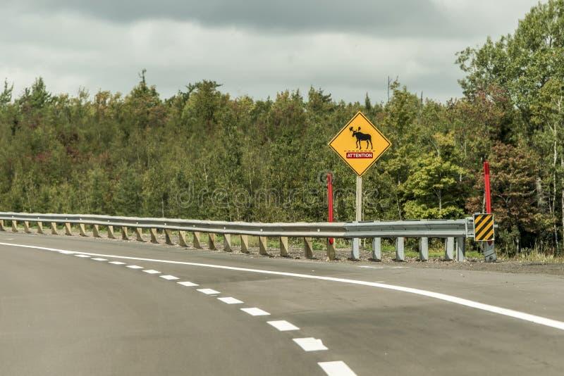 Gul korsning för älg för uppmärksamhet för varning för diamanttrafikvägmärke, postad tillsammans med väg quebec för trans. Kanada royaltyfria bilder