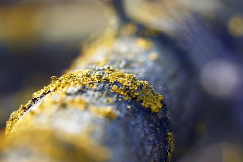 Gul lav som växer på skället av ett träd arkivbilder