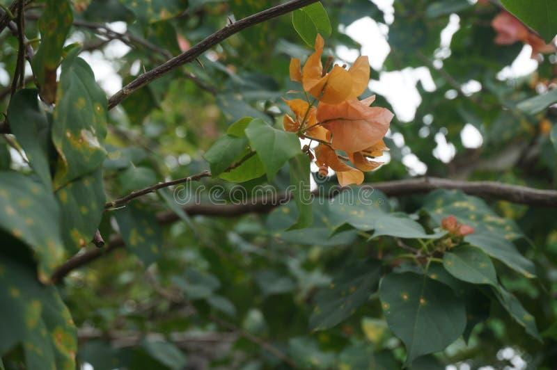 Gul Leaf fotografering för bildbyråer