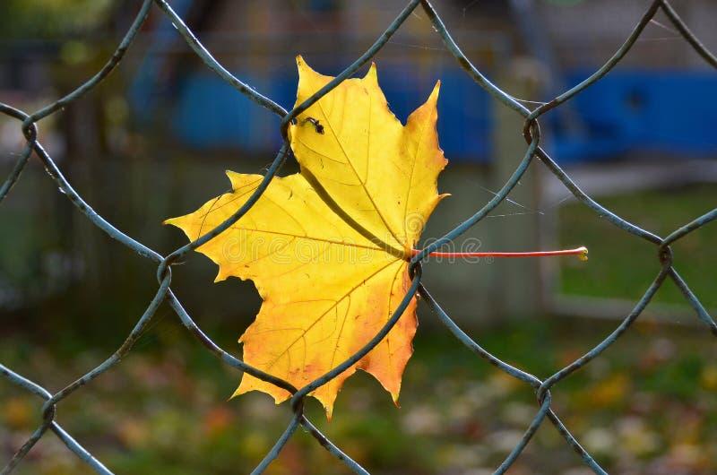 Gul Leaf royaltyfri bild