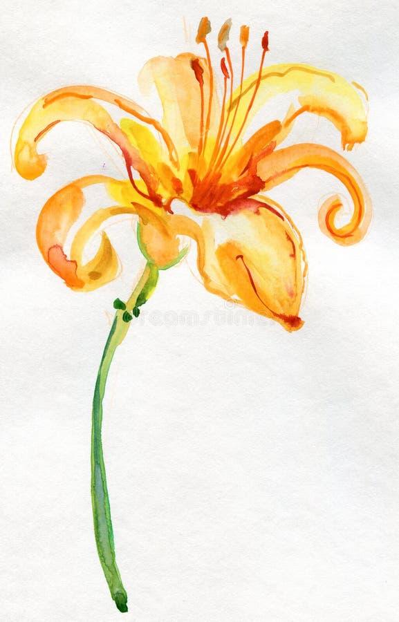 Gul liljablomma, vattenfärgillustration royaltyfri illustrationer
