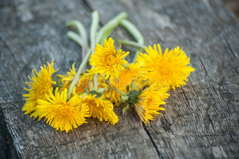 Gul maskrosbukett för lösa blommor på träbänk arkivbild