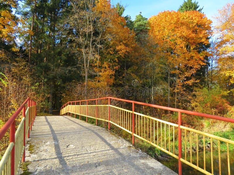 Gul metallisk spång och härliga höstträd, Litauen royaltyfri foto