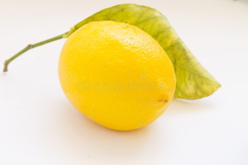 Gul mogen citron arkivbilder