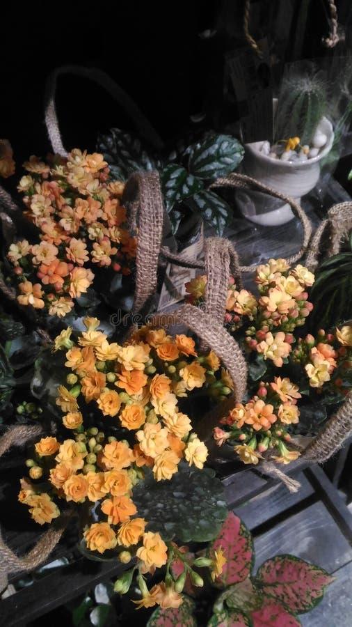 Gul mycket liten blomma på hylla arkivbilder