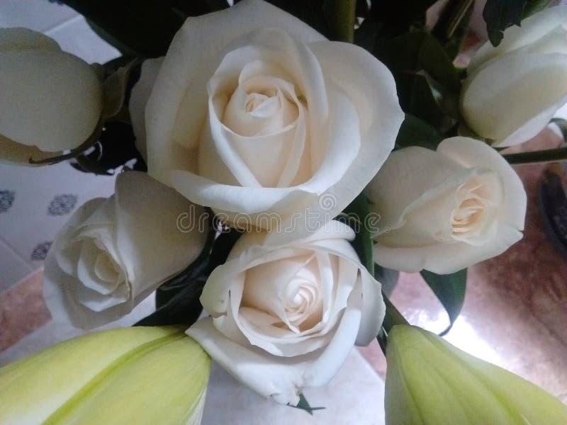 Gul naturlig blomma för vit i omgivande kall ligth royaltyfria bilder