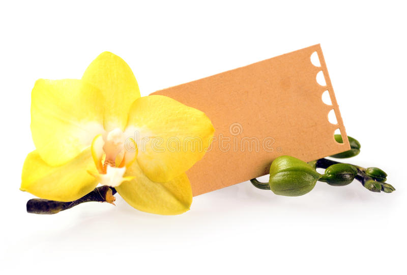 Gul phalaenopsisorkidé med en gåvaetikett royaltyfri bild