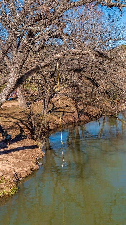 Gul repgunga på ett träd som växer över vattnet på en flod fotografering för bildbyråer