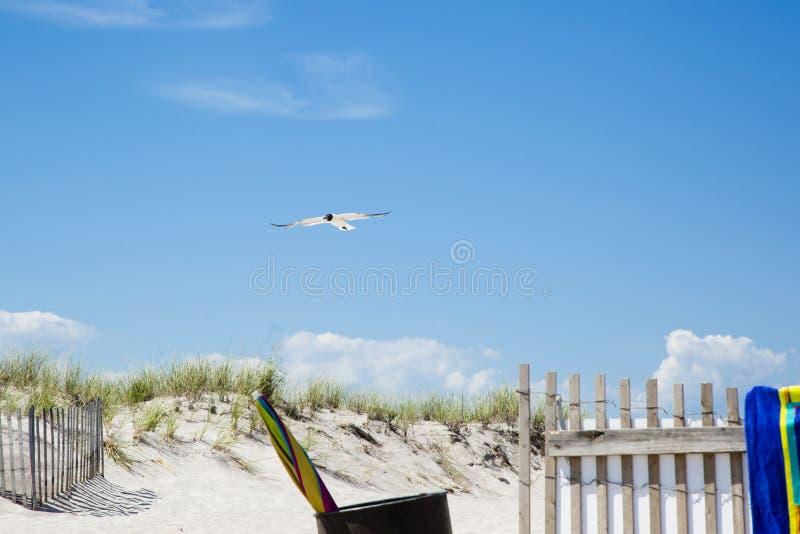 Gul riant croisant au-dessus de l'entrée de plage photo libre de droits