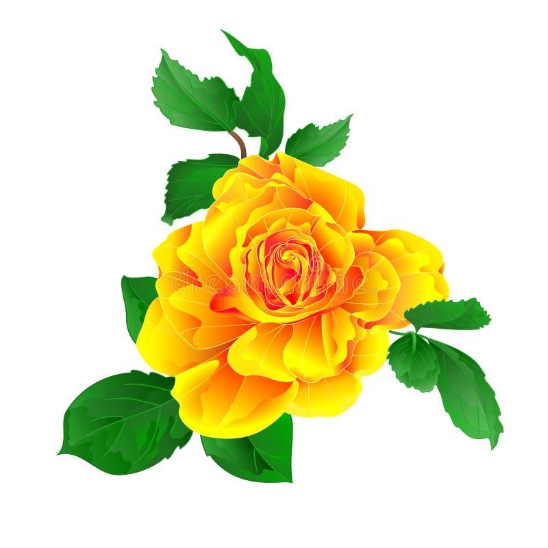 Gul ros för stamblomma och sidavattenfärgtappning på en redigerbar vit illustration för bakgrundstappningvektor vektor illustrationer