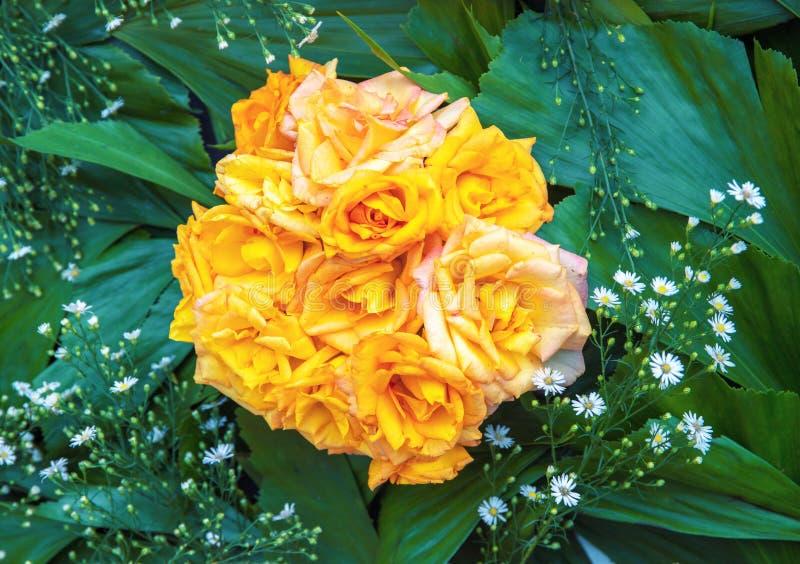 Gul rosa bukettcloseup Vibrerande blom- texturfoto Rosa blommor i gröna sidor Romantisk banermall royaltyfri fotografi