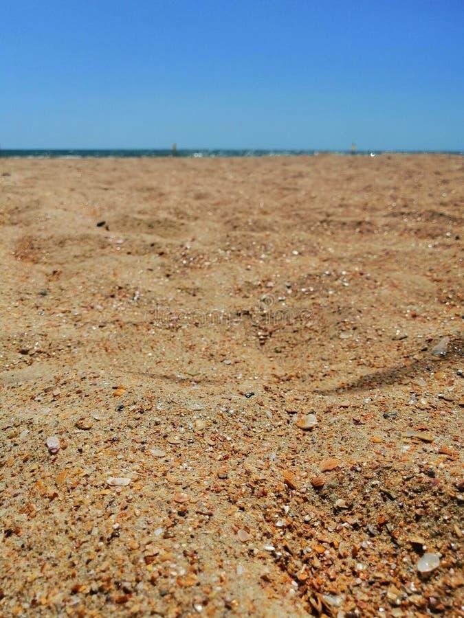 Gul sand med skal i skuggan arkivfoto