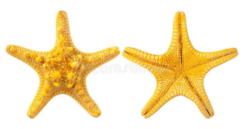 gul sjöstjärna royaltyfri fotografi