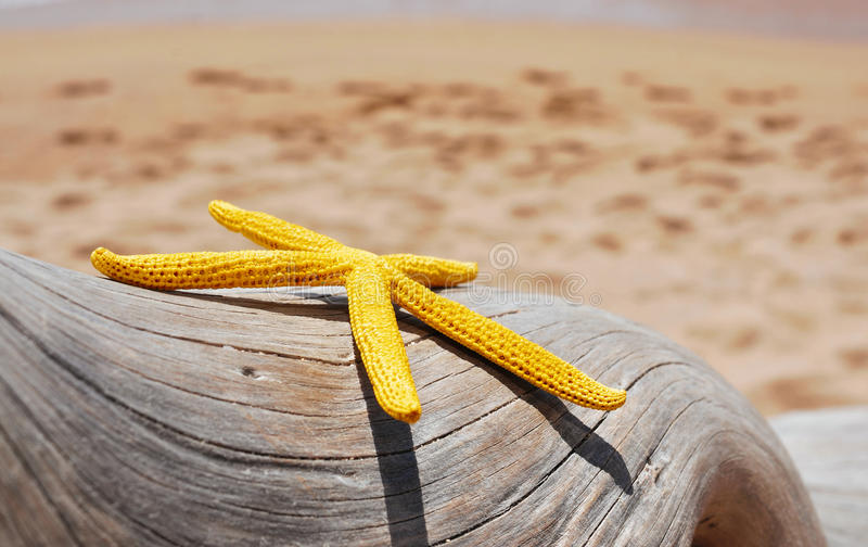 Gul sjöstjärna på en gammal urtvättad trädstam på stranden royaltyfria bilder